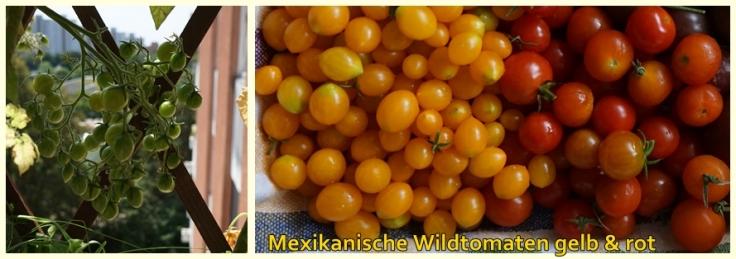 Sorte Mexikanische Wildtomaten gelb und rot