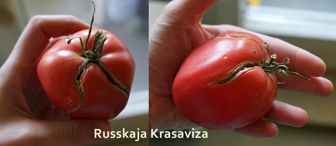 Sorte Russische Schönheit