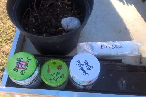 Pflanzentauschtisch - Saatgut Gläser Vermehrung